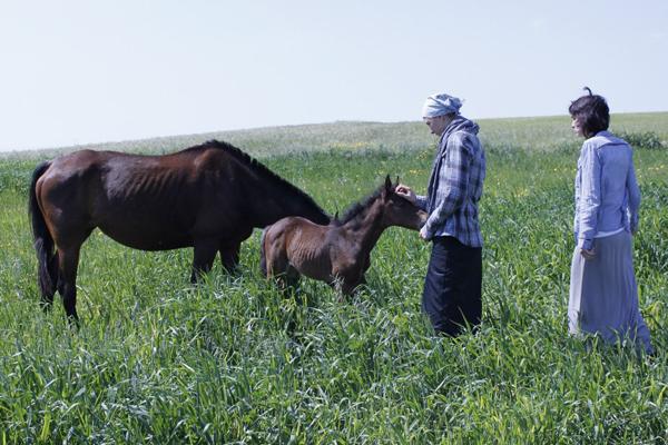 На Кипре тоже есть лошади )))