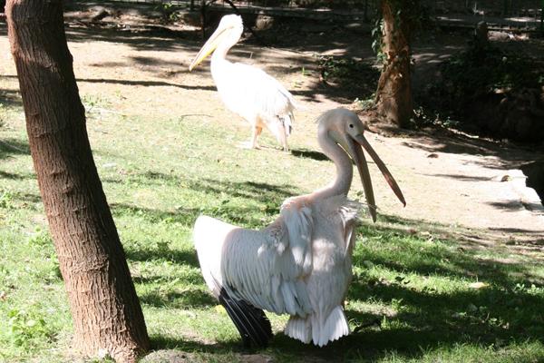 В Варненском зоопарке