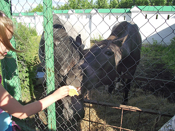 Мини-зоопарк Муромского Спасо-Преображенского монастыря